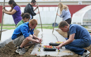 Students sit and stand on either side of a bed covered in biodegradable plastic, working together to poke holes and plant seedlings from trays